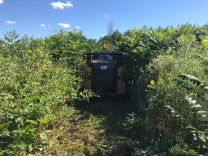 Brush Removal by McDonald Property Services